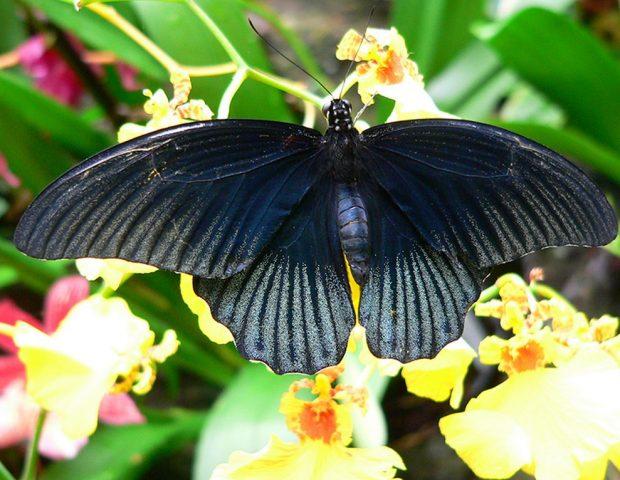 Jardin aux papillons Vannes Morbihan