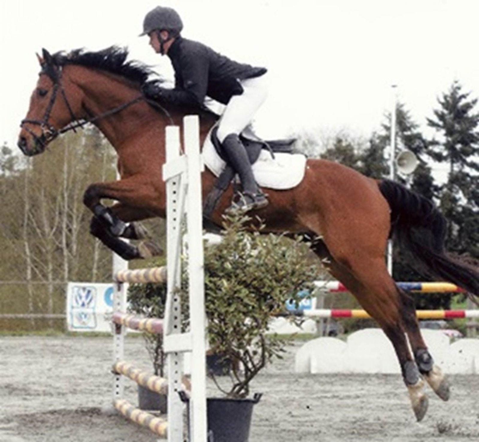 Photo saut d'obstacle – Haras du Cosquer