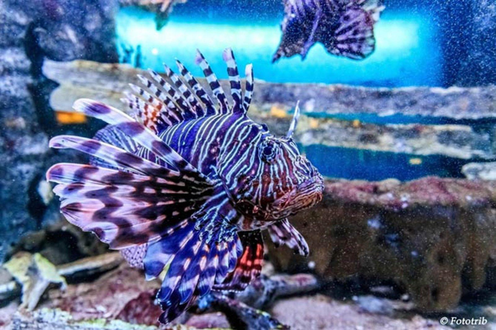 Aquarium Vannes Morbihan
